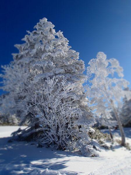 小雪 (1).jpg